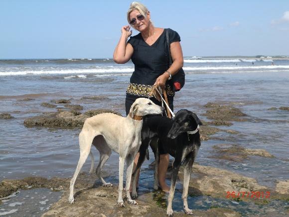 Elevage Siham Sahara - eleveur de chiens Sloughi